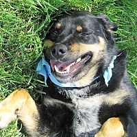Adopt A Pet :: Jed - Godley, TX