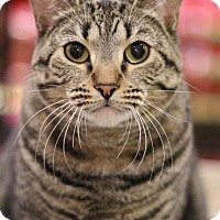 Adopt A Pet :: Dutchess - Sacramento, CA