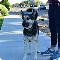 Adopt A Pet :: Brando - Meridian, ID