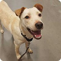 Adopt A Pet :: Jett - Las Cruces, NM
