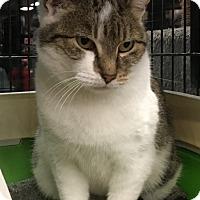 Adopt A Pet :: Ellie - Bear, DE