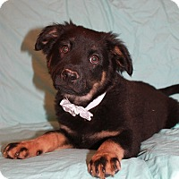 Adopt A Pet :: Cato - Hagerstown, MD
