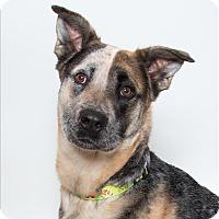 Adopt A Pet :: Lacy - San Luis Obispo, CA