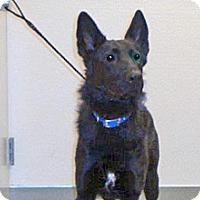 Adopt A Pet :: Micah - Wildomar, CA