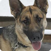 Adopt A Pet :: Bay - Potsdam, NY
