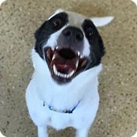 Adopt A Pet :: target - Marion, IN