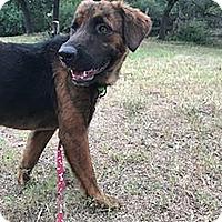 Adopt A Pet :: Neo - Austin, TX