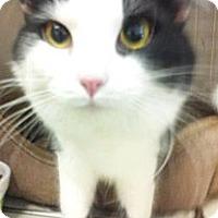 Adopt A Pet :: Boston - Chandler, AZ