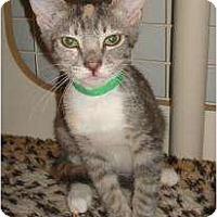 Adopt A Pet :: Patti - Phoenix, AZ