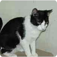 Adopt A Pet :: Micki - Arlington, VA