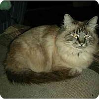 Adopt A Pet :: Princess - Washington Terrace, UT