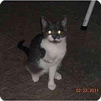 Adopt A Pet :: Sophia - Riverside, RI