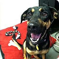 Adopt A Pet :: Domino - Fort Riley, KS