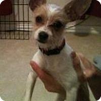 Adopt A Pet :: Puppy Bitsie in Houston - Houston, TX