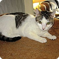 Adopt A Pet :: Ellie - Kirkwood, DE