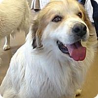 Adopt A Pet :: Romeo  *Adopted - Tulsa, OK