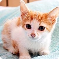 Adopt A Pet :: Jackson - Xenia, OH