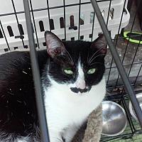 Adopt A Pet :: Ralphie - Sarasota, FL