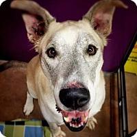 Adopt A Pet :: Sumptuous Sitka - Issaquah, WA