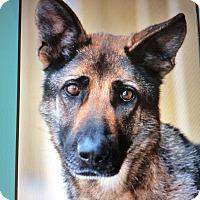 Adopt A Pet :: FRIDA. (Killo)VON KREFELD - Los Angeles, CA