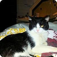 Adopt A Pet :: Tux davis - Norristown, PA