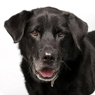 Retriever (Unknown Type) Mix Dog for adoption in Westfield, New York - Jazz