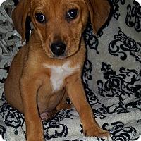 Adopt A Pet :: Grace - Cleveland, OH