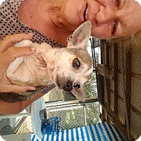 Adopt A Pet :: Chico - Palm Bay, FL