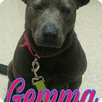 Adopt A Pet :: Gemma - Union City, TN
