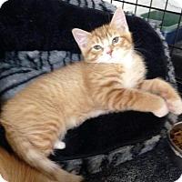 Adopt A Pet :: Barley - River Edge, NJ