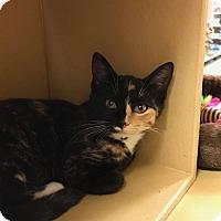 Adopt A Pet :: Suki - Mansfield, TX