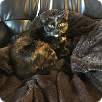 Adopt A Pet :: Alexi - Vancouver, BC