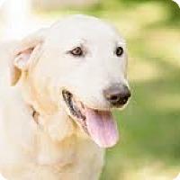 Adopt A Pet :: Danny - Lewisville, IN