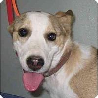 Adopt A Pet :: Tawny - Scottsdale, AZ