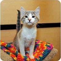 Adopt A Pet :: Samus - Farmingdale, NY
