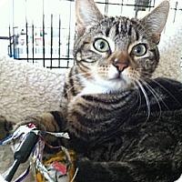 Adopt A Pet :: Serena - Santa Monica, CA