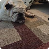 Adopt A Pet :: Tony - Cibolo, TX