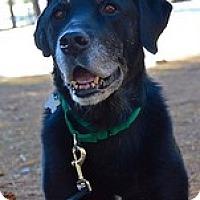Adopt A Pet :: Jack Boy - Torrance, CA