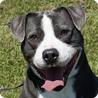 Adopt A Pet :: Spike - Dundee, MI