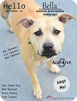 American Staffordshire Terrier Mix Dog for adoption in Port Charlotte, Florida - Bella