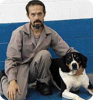 Treeing Walker Coonhound Mix Dog for adoption in Newland, North Carolina - Keiko *Trained