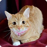 Adopt A Pet :: Kit - Midland, TX