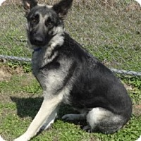 Adopt A Pet :: Cece - Olive Branch, MS