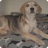Adopt A Pet :: Julie - Burgaw, NC
