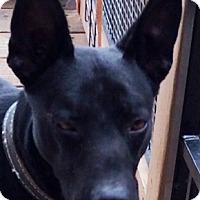 Adopt A Pet :: Jax - Poway, CA