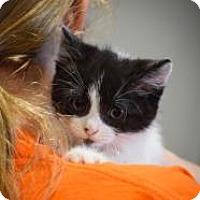 Adopt A Pet :: Fudge - Dallas, TX