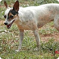Adopt A Pet :: Pheobe - hartford, CT