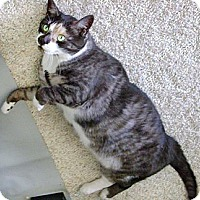 Adopt A Pet :: Holly - Howell, MI