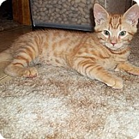 Adopt A Pet :: Citrine - Acme, PA