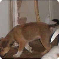 Adopt A Pet :: Paws - New Boston, NH